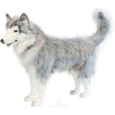 6034 Хаски серый, стоящий, 75 см