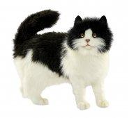 Мягкая игрушка Кошка черно-белая 4221,40 см, Hansa